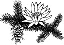 Greenwood Blue Lotus logo of waterlily and fir branch with cone